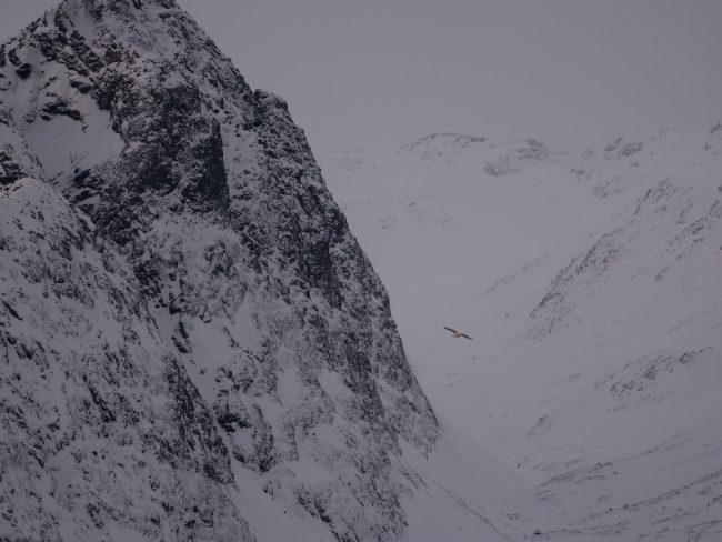 panasonic g9 fjord
